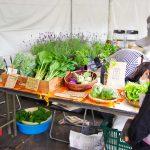 野菜マルシェを開催